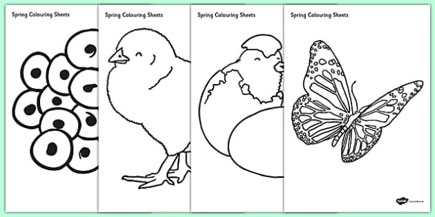 Spring Colouring Sheets -  Spring, colouring, fine motor skills, poster, worksheet, lambs, daffodils, new life, flowers, buds, plants, growth