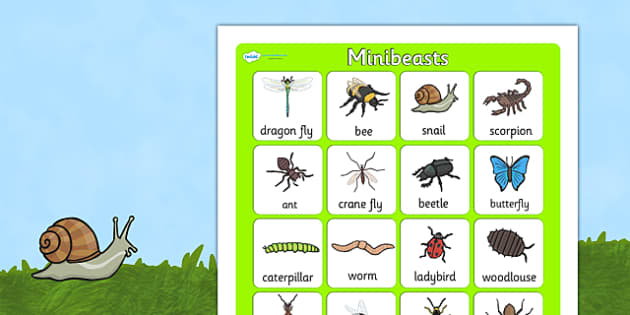 Minibeast Vocabulary Poster - minibeasts, vocab poster, display