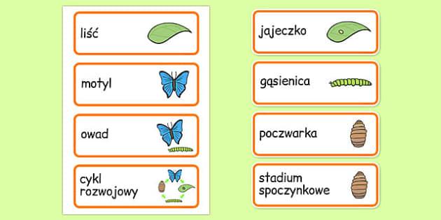 Karty ze słownictwem Cykl życiowy motyli po polsku - przyroda
