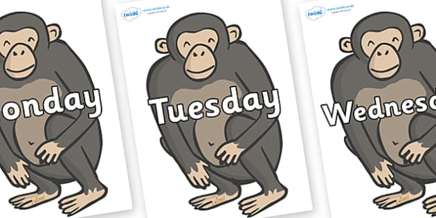 Days of the Week on Chimpanzees - Days of the Week, Weeks poster, week, display, poster, frieze, Days, Day, Monday, Tuesday, Wednesday, Thursday, Friday, Saturday, Sunday