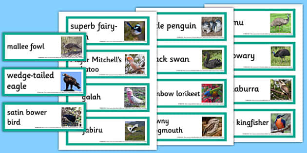 Australian Birds Word Cards - australia, animals, birds, word cards