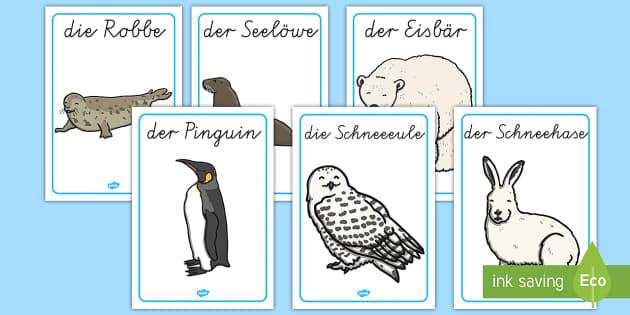 Polartiere Bilder Poster DIN A4 - Polargebiet, Winter, Wintertiere, Polartiere, Arktis, Antarktis, Poster,German