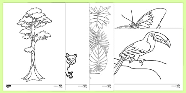 Rainforest Themed Colouring Sheets - kapok tree, the great kapok tree, rainforest themed, colouring, colour, sheets