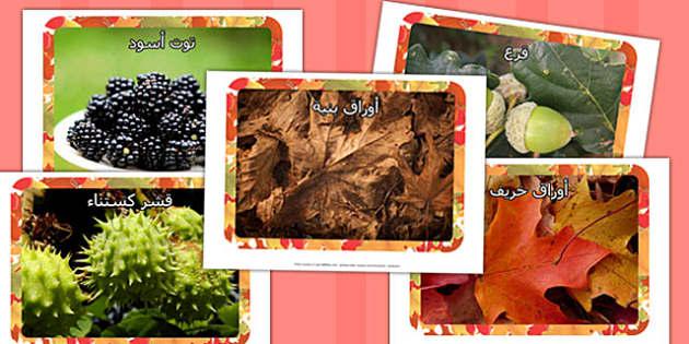 صور عرض عن الخريف - الخريف، وسائل تعليمية