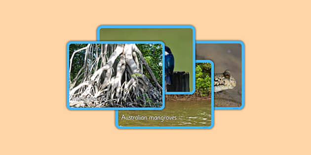 Australian Mangrove Habitat Photo Display Pack - australia, Science, Habitats, Australian Curriculum, Mangroves, Living, Living Adventure, Good to Grow, Ready Set Grow, Life on Earth, Environment, Living Things, Animals, Plants, Photos, Photographs,