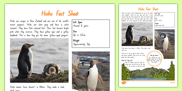 New Zealand Native Birds Hoiho Fact Sheet - nz birds, new zealand, Native, birds, animals