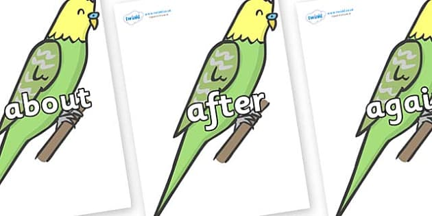 KS1 Keywords on Budgies - KS1, CLL, Communication language and literacy, Display, Key words, high frequency words, foundation stage literacy, DfES Letters and Sounds, Letters and Sounds, spelling