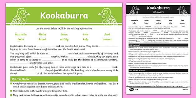 Australian Animals Years 3-6 Kookaburra Differentiated Cloze Passage Activity Sheet - australia, Australian Curriculum, birds, kookaburra, turtle, differentiated, cloze, fast finisher, information, reading, worksheet