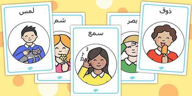ملصقات عرض حواسي - حواسي، الحواس الخمس، حواس الإنسان