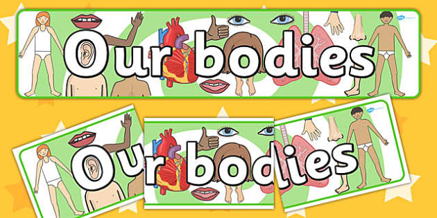 Our Bodies Display Banner - display banner, banner, our bodies