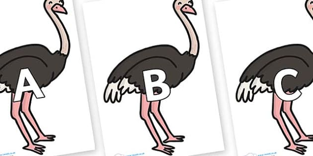 A-Z Alphabet on Ostriches - A-Z, A4, display, Alphabet frieze, Display letters, Letter posters, A-Z letters, Alphabet flashcards