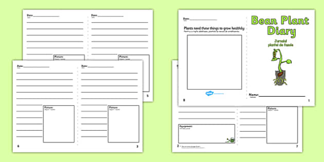 Bean Plant Diary Writing Frame Romanian Translation - romanian, Bean Plant Diary, Bean, writing template, writing frames, word cards, flashcards, template, growth, plant, life cycle, lifecycle, diary, plant growth, beans, garden, Topic, Foundation st