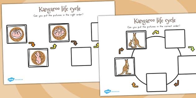 Kangaroo Life Cycle Worksheets - australia, life cycles, kangaroo