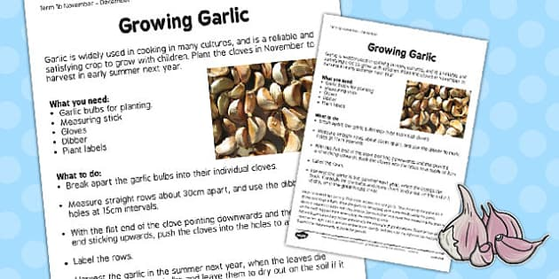 Growing Garlic Worksheet - growing, garlic, worksheet, grow