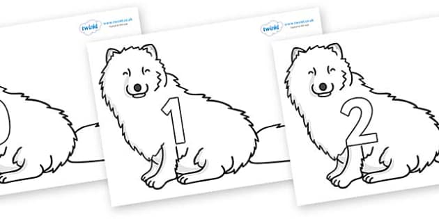 Numbers 0-31 on Arctic Foxes - 0-31, foundation stage numeracy, Number recognition, Number flashcards, counting, number frieze, Display numbers, number posters