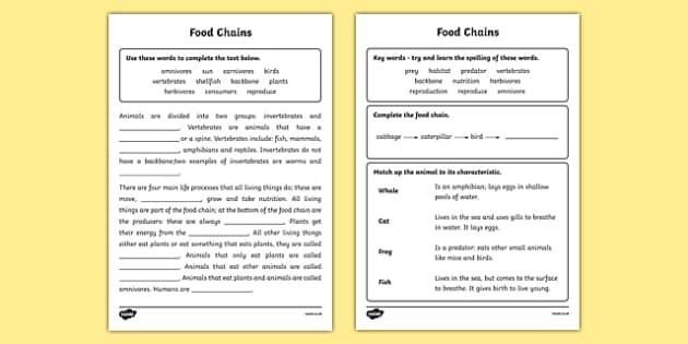 Food chain sheet ks2