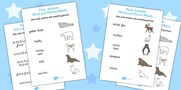 Polar Animals Word and Picture Matching Worksheet - worksheets