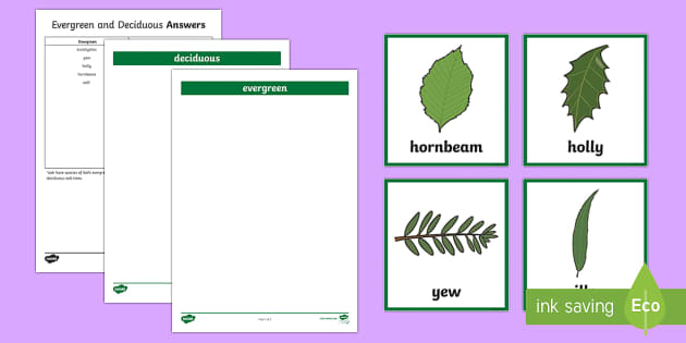 Deciduous and Evergreen Trees Sorting Activity - deciduous, evergreen, trees, sorting activity, sort, activity