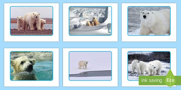 Polar Bear Display Photos - The Arctic, Polar Regions, north pole, south pole, explorers
