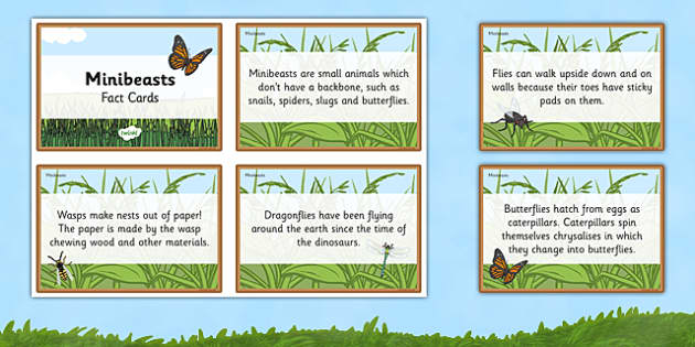 Amazing Minibeast Display Fact Cards - minibeast, fact, cards