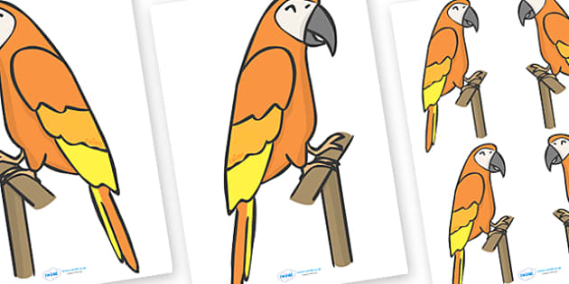 Editable Parrot (A4) - Parrot, parrots, editable, A4, animal, animals, tropical, rainforest, bird, birds, colourful