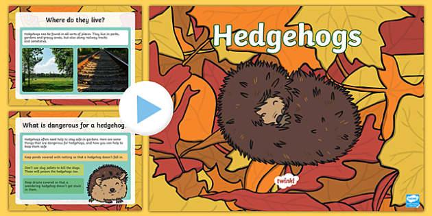 Hedgehogs PowerPoint