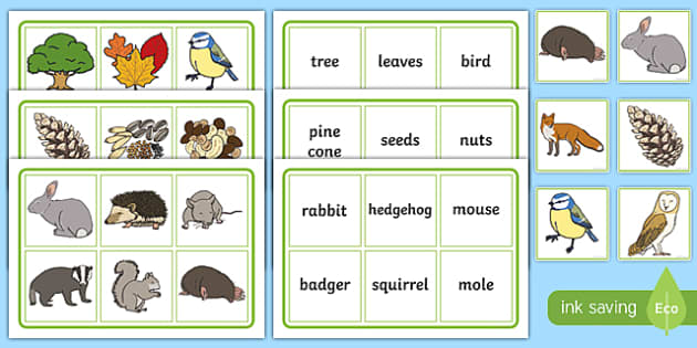 Woodland and Forests Matching Game - woodland, forests, matching, match, matching game, game, activity