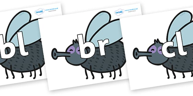 Initial Letter Blends on Flies - Initial Letters, initial letter, letter blend, letter blends, consonant, consonants, digraph, trigraph, literacy, alphabet, letters, foundation stage literacy