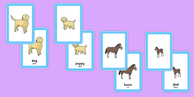 Animals and Their Young Matching Cards Romanian Translation - romanian, animals, animal, young, animal babies, animal children, puppy, kitten, foal, dog, cat, horse