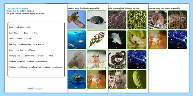 Food Chain Sorting Game - food chain, food chains, food chain sorting activity, food chain game, food chain sorting cards, building food chains, ks2 game