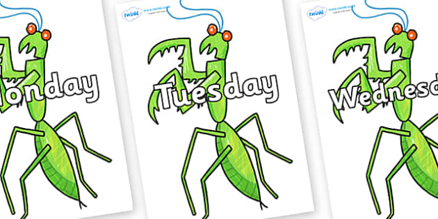 Days of the Week on Praying Mantis to Support Teaching on The Bad Tempered Ladybird - Days of the Week, Weeks poster, week, display, poster, frieze, Days, Day, Monday, Tuesday, Wednesday, Thursday, Friday, Saturday, Sunday