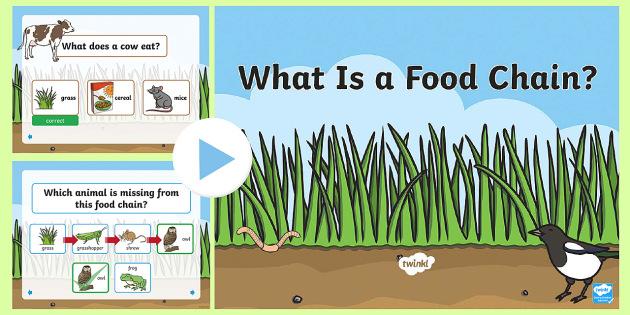 Food chain lesson ks1
