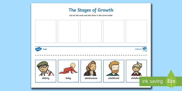 Human Life Cycle Cut And Stick Activity Human Stages Of