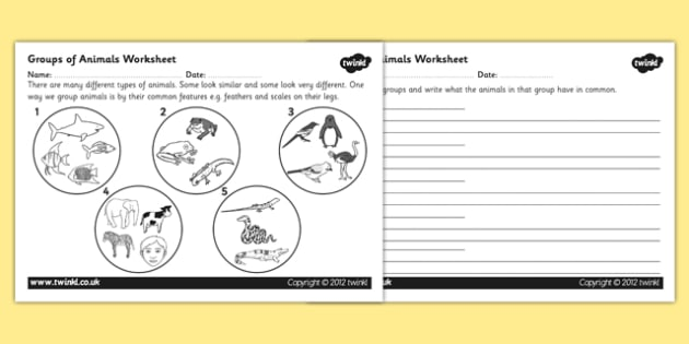 Animal Groups Worksheet animals living things classifying – Animal Classification Worksheets