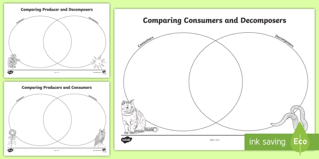 Consumers Producers and Decomposers Venn Diagram Activity – Producer Consumer Decomposer Worksheet
