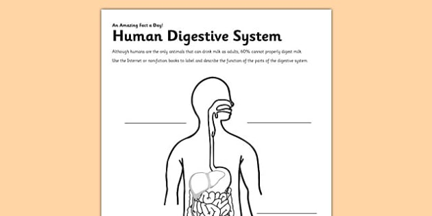 Human Digestive System Activity Sheet digestion digestive – Digestive System Labeling Worksheet