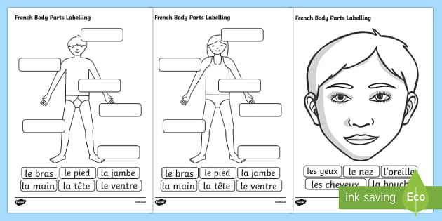French Body Parts Labelling Worksheet French Body Part – Parts of the Body Worksheet