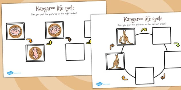 Kangaroo Life Cycle Worksheets - australia, life cycles