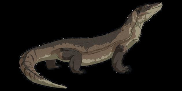 Komodo Dragon Exercise