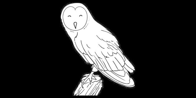 Barn Owl Bird Animal Woodland Farm Usa Ks1 Black And White Rgb Illustration