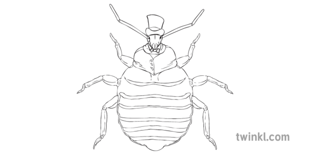 Bedbug Cartoon Insect Tophat Bug Mps Ks2 Bw Rgb Illustration Twinkl