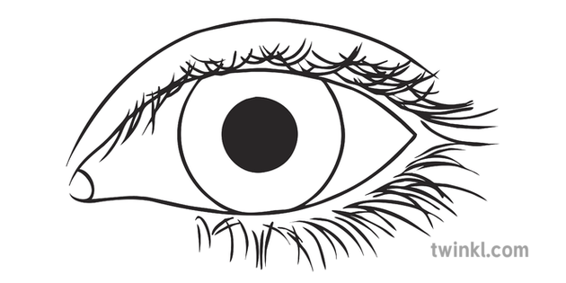 Brown Eye Face Body Description Sight English Ks3 Bw Rgb Illustration