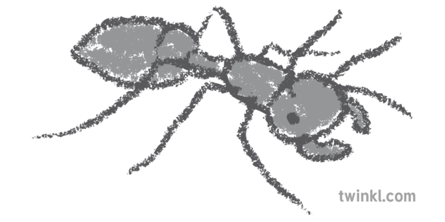 Bullet Ant 1 Grey Rgb Illustration Twinkl