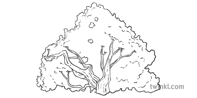 Bush Proverbs Plant Garden Nature Background Topics KS2 Bw