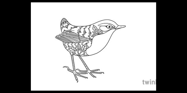 Bush Wren Extinct Birds New Zealand Mindfulness Colouring Illustration