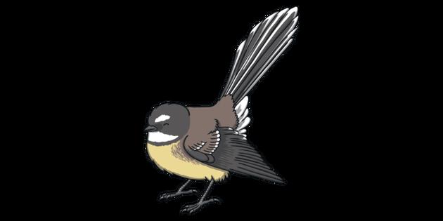 Fantail Bird Twinkl Eyes Illustration Twinkl Ariano fantial is on facebook. fantail bird twinkl eyes illustration