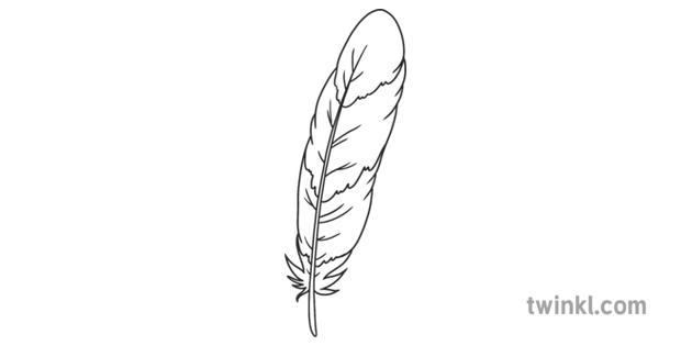Feather 1 Fantastic Feathers Birds Animals Ks1 Black And White Rgb