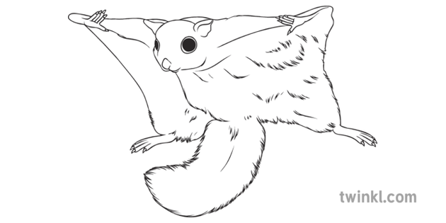 Flying Squirrel Geography Tropical Rainforest Animals Wildlife Secondary Bw