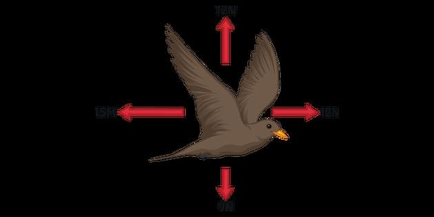 bird flight diagram forces acting on a bird in full flight science diagram ks3 ks4  full flight science diagram ks3 ks4