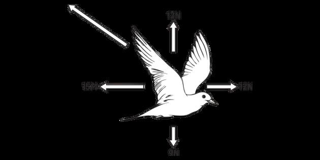 bird flight diagram forces acting on a bird in full flight answer science diagram ks3  full flight answer science diagram ks3